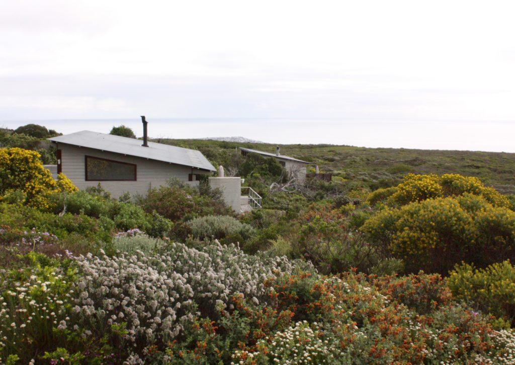 Ekolodge bland fynbos Kaphalvön Sydafrika