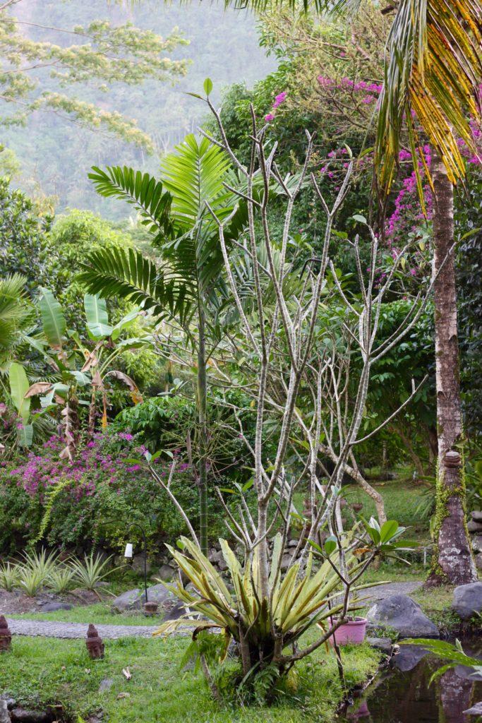 Darmada ekohotell Bali