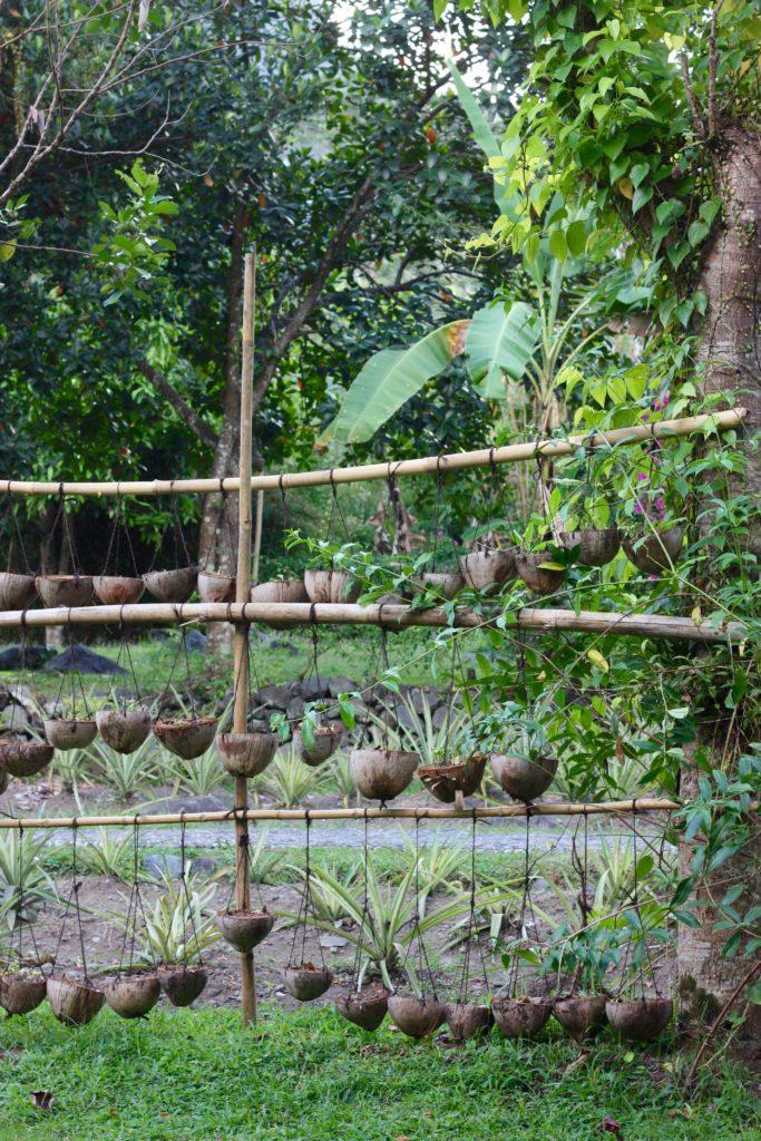 Köksträdgård Darmada ekohotell Bali