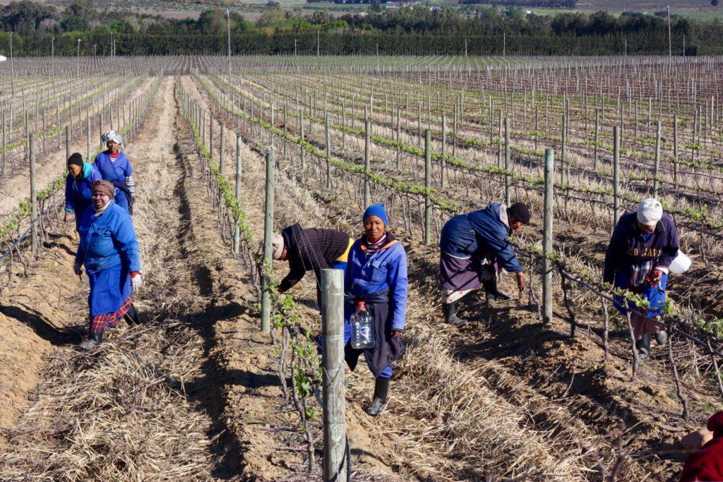 Hållbart resande Sydafrika