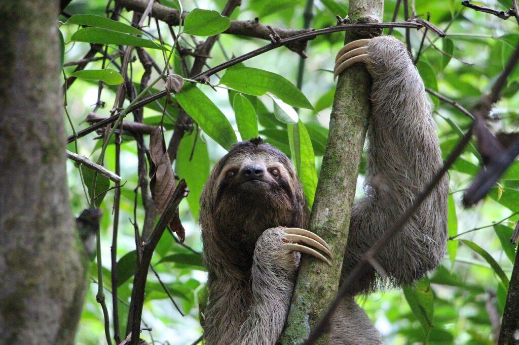 Costa Rica landet i Centralamerika och paradis för naturälskare