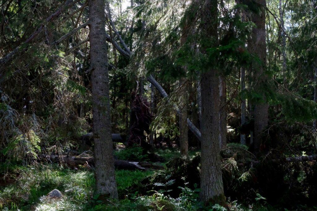 Stormen Alfridas spår på Lidö
