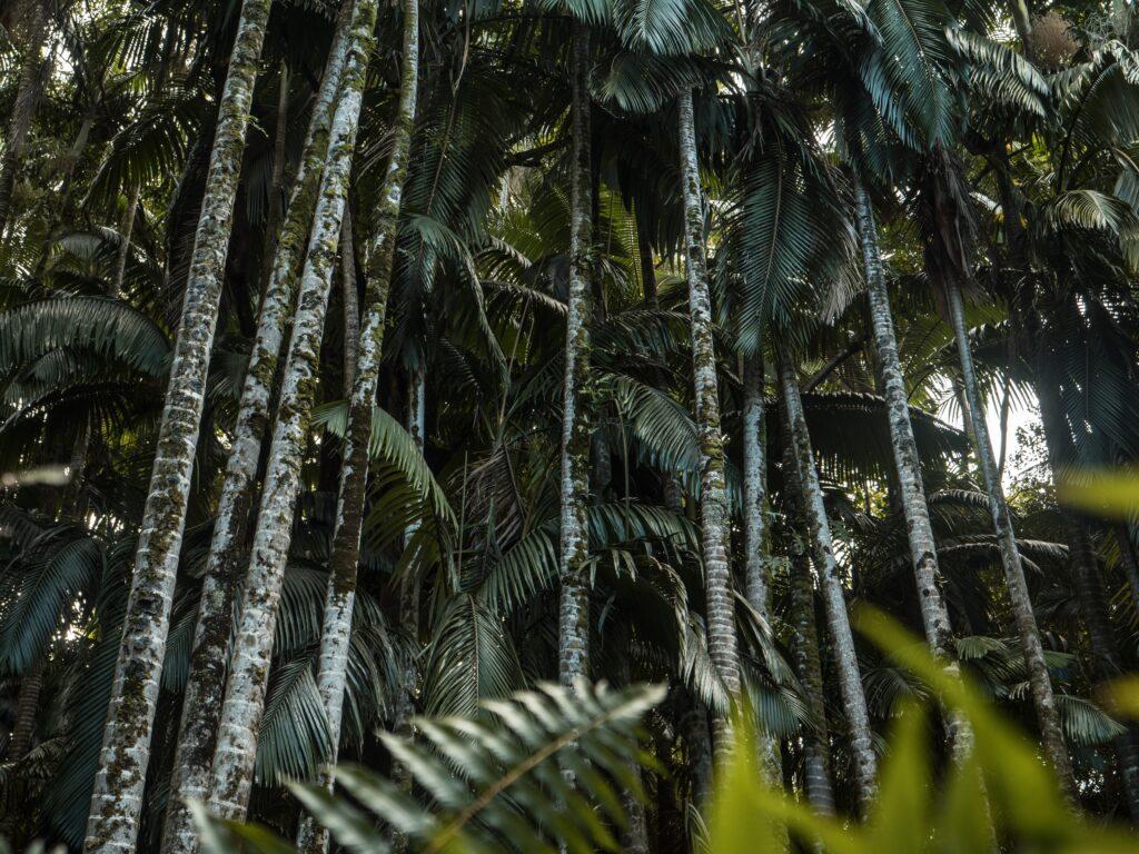 Grön turism, ekoturism, hållbar turism. Olika namn samma innebörd.