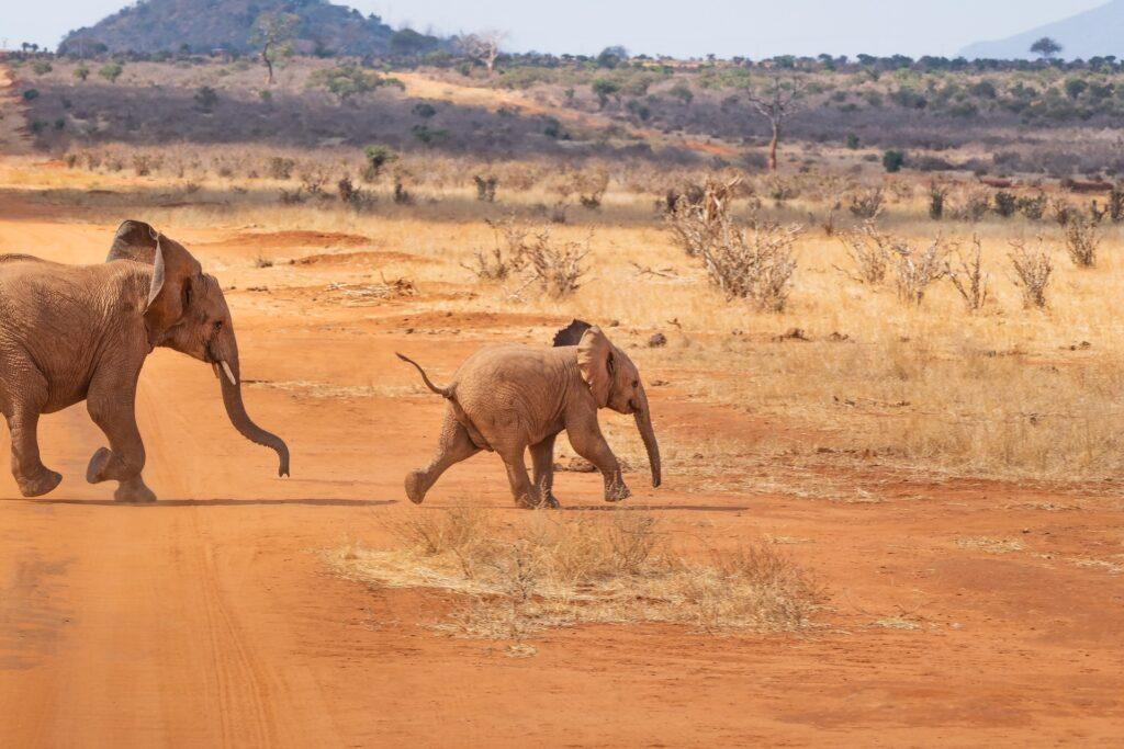 Djurturism safari ekoturism