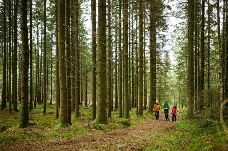 Skog Gotaleden