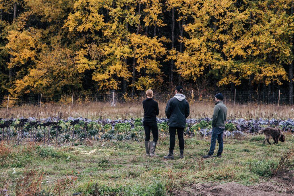 Karshamra Farm en schyst lunchrestaurang Stockholm