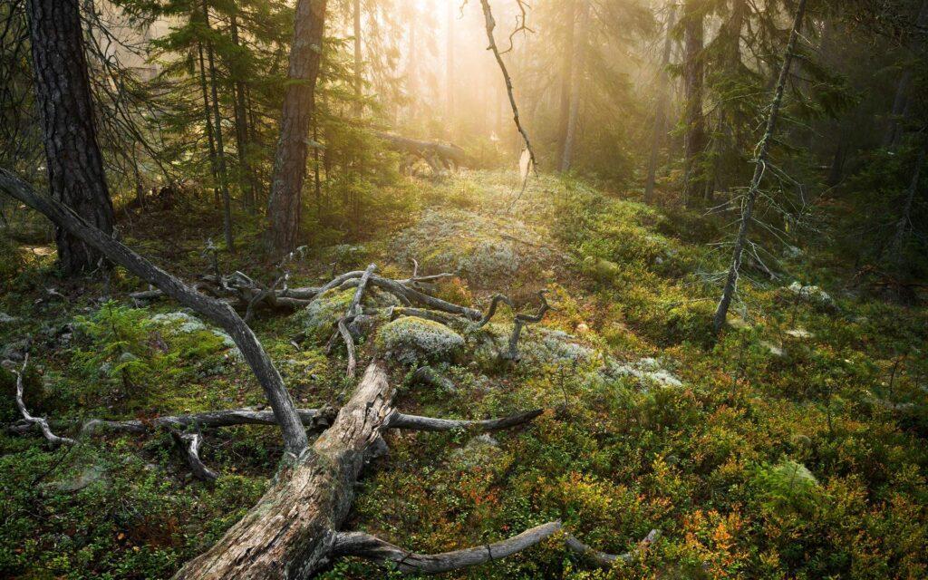 Hemmapåsk vandring Tyresta nationalpark