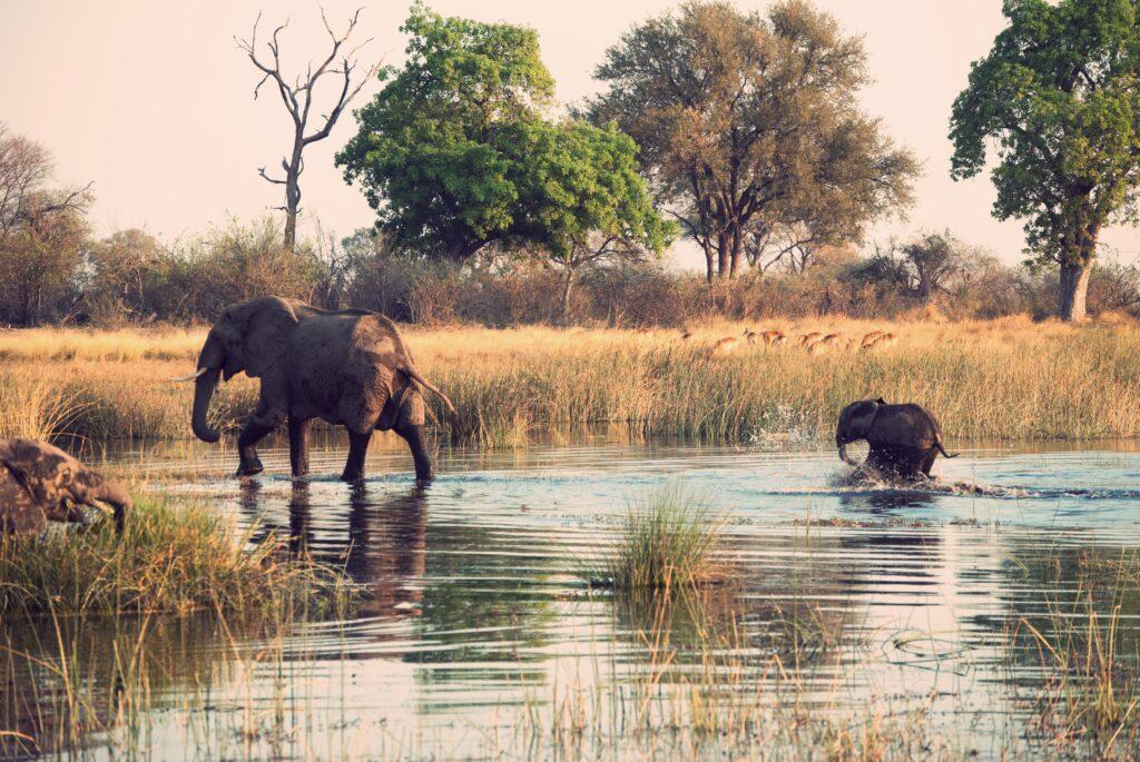 Elefanter i det vilda