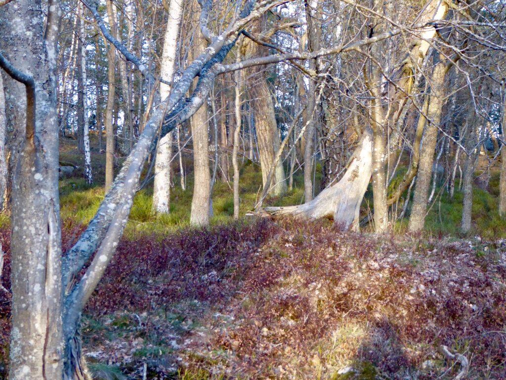 Trollskog Djurgården