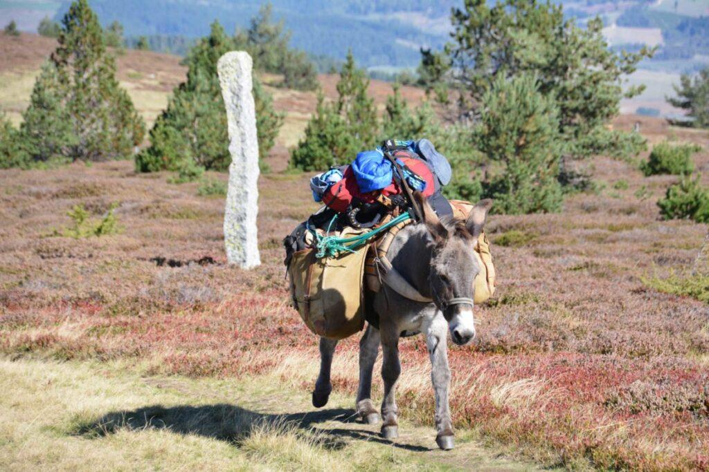 Ekoturism Frankrike Cevennerna vandra med åsna