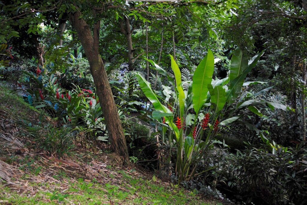 Klimatsmart Grenada natur