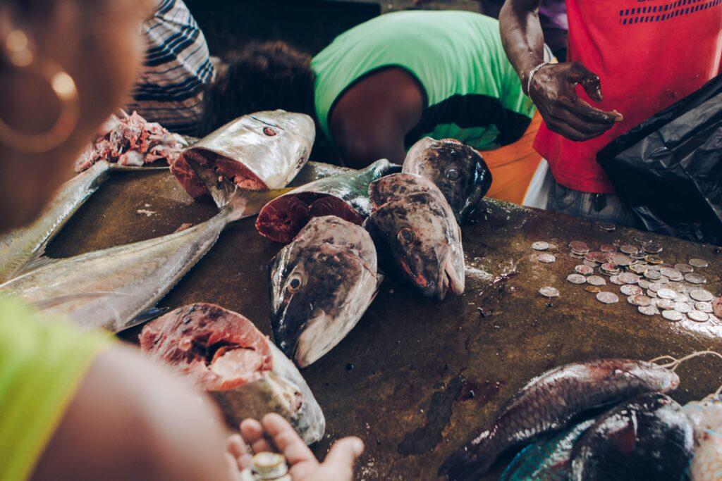 Seychellerna fiskmarknad Victoria