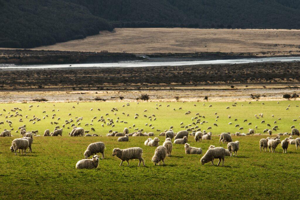 Nya Zealand destinationer att ha koll på 2021