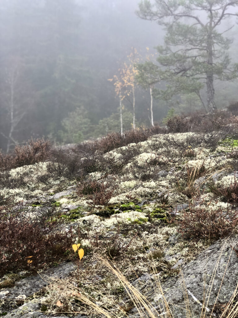 Sörknattens naturreservat Dalsland